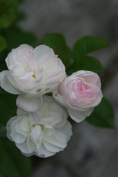 Bouquet_Parfait17.JPG