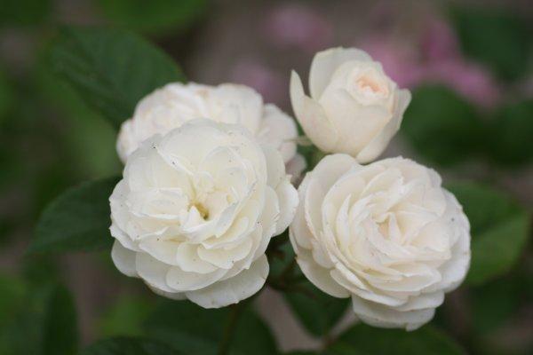 Bouquet_Parfait7.JPG